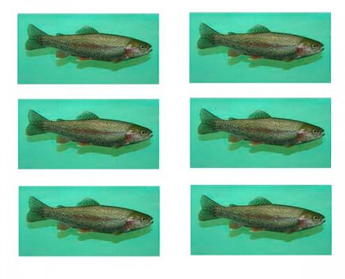 6 Fish