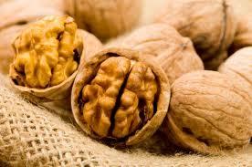 walnut as brain