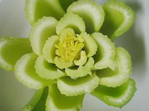Celery cut