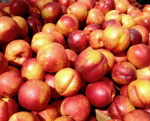 Nectarine bunch