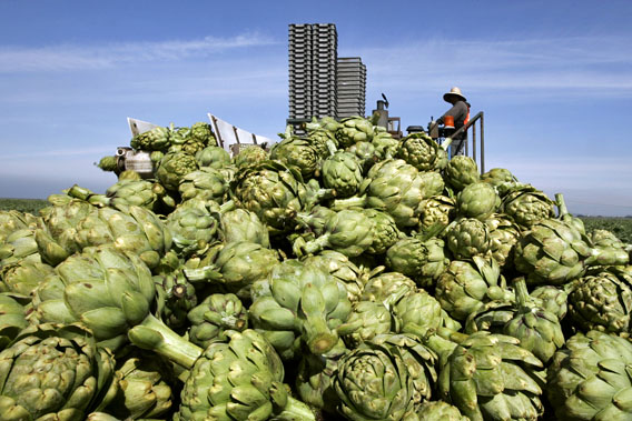 California produces a sizable majority of many American fruits, vegetables and nuts, including 99% of artichokes. Photo by: REUTERS/Darrin Zammit Lupi (UNITED STATES) - RTR1Z4M5